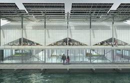 Ghé thăm trang trại gà khổng lồ trên nước tại Hà Lan