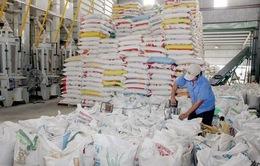 Giá trị xuất khẩu gạo 6 tháng tăng gần 18%