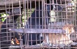 Campuchia cấm thịt chó tại Siem Reap, người vi phạm có thể bị phạt 5 năm tù