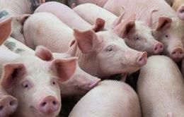 """Giá thịt lợn tại các địa phương """"hạ nhiệt"""""""