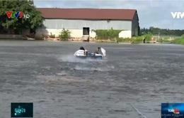 Cá tra bơi về đâu giữa mùa Covid-19?