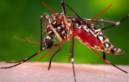 Tăng cường diệt lăng quăng, diệt muỗi để phòng chống bệnh chikungunya