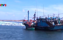 Phú Yên: Bắt giữ 2 tàu đánh bắt trái phép