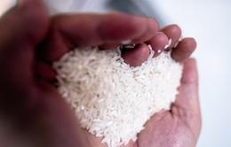 Người châu Âu thích ăn gạo như thế nào?
