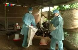 Đắk Lắk: Tăng cường kiểm tra, giám sát dịch cúm gia cầm.