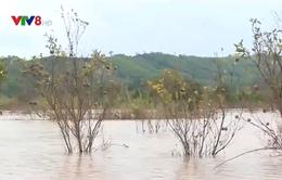Đắk Lắk: Hồ thủy lợi gây ngập úng hoa màu của người dân