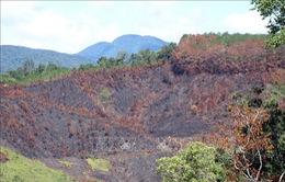 Kỷ luật khiển trách 3 cán bộ để cháy gần 12 ha rừng
