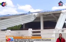 Diễn biến mưa bão tại Cuba và Mỹ