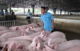 """Giá thịt lợn giảm """"nhỏ giọt"""" dù lợn hơi lao dốc mạnh"""