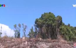 Lợi dụng chính sách giao đất trồng rừng để phá rừng