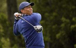 PGA Championship 2020: Tiger Woods đánh 68 gậy trong ngày mở màn
