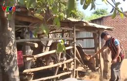 Gia Lai: Đẩy mạnh giảm nghèo bền vững