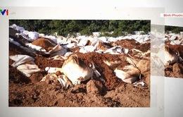 Nguy cơ ô nhiễm đất và nước ngầm từ hàng nghìn tấn rác thải nguy hại chôn trộm