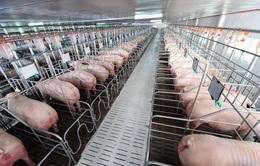 Ngành chăn nuôi hướng tới mục tiêu xuất khẩu