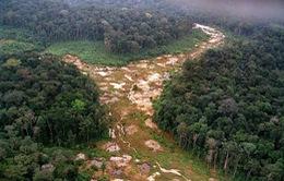 Thế giới bị mất 100 triệu ha rừng trong 2 thập kỷ
