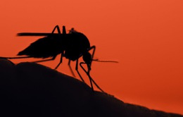 Xuất hiện muỗi gây sốt rét mới ở châu Phi