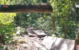 Tái diễn phá rừng tại Rừng phòng hộ Sro, Gia Lai