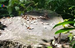 Tái diễn nạn phá rừng tại rừng phòng hộ Sró