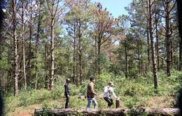 Một loạt địa phương xin chuyển đổi diện tích rừng, Bộ NN&PTNT nói gì?
