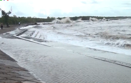 Đê biển Cà Mau bị uy hiếp do mưa lớn