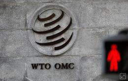 WTO ủng hộ EU đánh thuế hàng hóa Mỹ do trợ cấp máy bay
