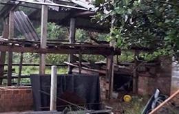 Lốc xoáy càn quét Quảng Ngãi, hàng chục ngôi nhà hư hỏng