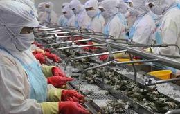 EVFTA có hiệu lực, tôm Việt vào EU tăng trưởng hai con số