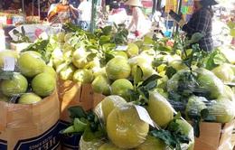 """Cước vận tải tăng """"chóng mặt"""", xuất khẩu trái cây gặp khó"""