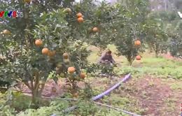 Phú Yên: Xây dựng thương hiệu nông sản bắt đầu từ việc sản xuất sạch