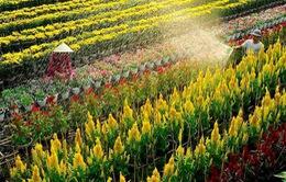 Phát triển du lịch từ làng hoa