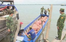 Thủ tướng yêu cầu xử lý thông tin vận chuyển trái phép lợn qua biên giới