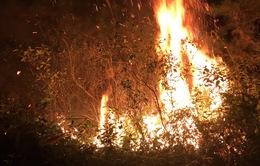 Cháy lớn khu rừng trồng ở Sóc Sơn