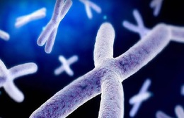 Bất thường nhiễm sắc thể - Nguyên nhân của bất thường sinh sản và dị tật bẩm sinh