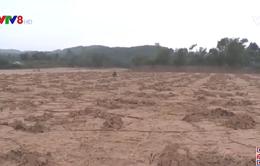 Khó khăn trong sản xuất nông nghiệp sau lũ