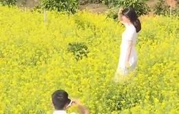 Cánh đồng hoa cải ngày xuân tại Đà Lạt