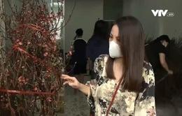 Hoa đào miền Bắc tại TP Hồ Chí Minh vẫn hút khách dù giá cao