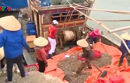 Hà Tĩnh đẩy mạnh xuất khẩu thủy hải sản
