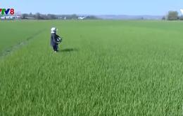 Kon Tum: Người dân chăm sóc cây trồng đầu xuân