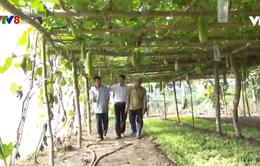 Rau an toàn - Hướng đi bền vững cho ngành nông nghiệp Kon Tum
