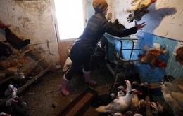 Nga lần đầu tiên phát hiện các ca nhiễm virus cúm gia cầm H5N8 ở người
