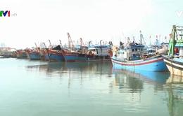 Ngư dân Đà Nẵng ra khơi