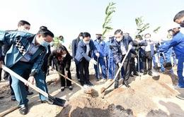 Hưởng ứng Tết trồng cây và chương trình 1 tỷ cây xanh