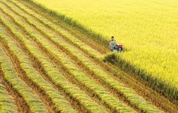 Thủ tướng đồng ý chuyển mục đích sử dụng 21,17ha đất trồng lúa tại Cần Thơ