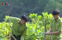 Khôi phục tài nguyên rừng ở thượng nguồn sông Ô Lâu