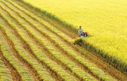 Thủ tướng đồng ý chuyển mục đích sử dụng đất trồng lúa tại Long An