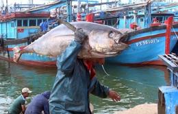 Ăn Tết trên biển - Nét văn hóa của ngư dân Nam Trung bộ