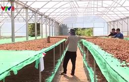 Đắk Nông: Nâng cao vai trò của hợp tác xã