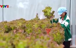 Kon Tum: Nâng cao giá trị sản phẩm nông nghiệp công nghệ cao