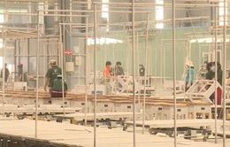 VCCI: Cần đảm bảo gỗ hợp pháp trong đấu thầu mua sắm công