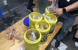 Bắt giữ 5,84 kg chất nghi là cần sa trong thùng quà tặng gửi từ Mỹ